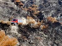 До 85 человек возросло число погибших в результате сильных лесных пожаров, начавшихся в понедельник близ Афин