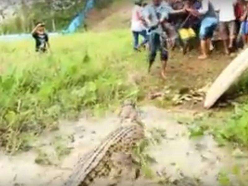 """В Индонезии фермеры устроили крокодиловую бойню, убив почти 300 рептилий"""" />"""