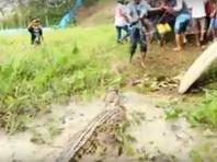 В Индонезии фермеры устроили крокодиловую бойню, убив почти 300 рептилий