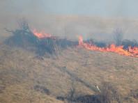 ВГреции задержали пиромана, поджигавшего леса