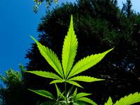 Каннабис в Канаде или как Страна кленового листа стала Страной листа марихуаны: отныне легализована ее продажа, хранение и выращивание
