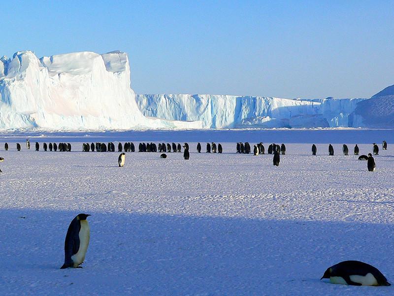 Американец Колин О'Брэди стал первым человеком, который сумел самостоятельно пересечь пешком Антарктиду