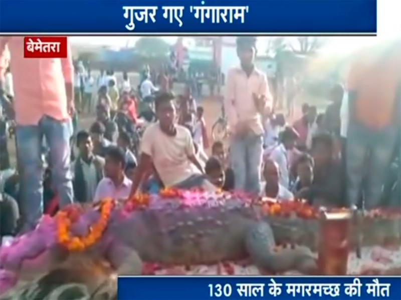 В Индии на похороны дружелюбного крокодила пришли 500 человек