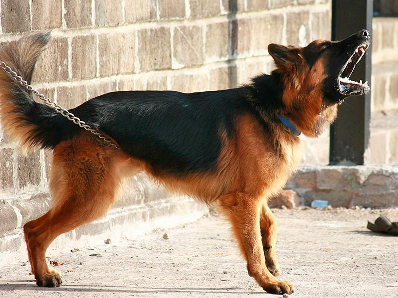 Мэр французского города ввел штрафы за назойливый собачий лай
