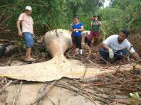 В бразильских джунглях обнаружили 8-метрового горбатого кита (ФОТО)