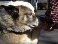 В Калифорнии пес вернулся к хозяевам через 101 день после пожара, уничтожившего весь город