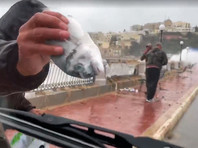 Шторм на Мальте: ветер и волны закидывали рыбу на набережную и автодорогу (ВИДЕО, ФОТО)