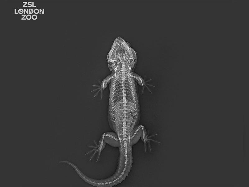 """Просвеченные рентгеном обитатели Лондонского зоопарка предстали в необычном виде на ФОТО"""" />"""