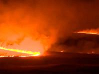 Аномально теплая погода в Западной Европе привела к смогу и природным пожарам