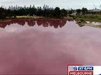 В Мельбурне появилась новая достопримечательность: внезапно ставшее розовым озеро (ВИДЕО, ФОТО)