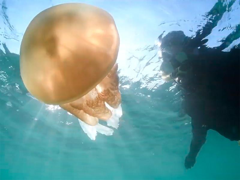"""Аномальное тепло привело к нашествию огромных медуз на английском курорте (ФОТО, ВИДЕО)"""" />"""