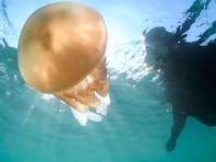 Аномальное тепло привело к нашествию огромных медуз на английском курорте (ФОТО, ВИДЕО)