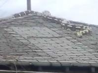 Пятиметровый питон на крыше дома перепугал жителей Детройта (ВИДЕО)