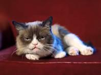 Умерла знаменитая кошка-мем и мультимиллионер Grumpy Cat