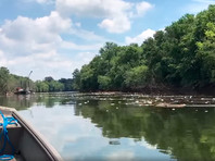 Разлив виски в Кентукки: в реке на участке в 37 км гибнет рыба, странный вкус водопроводной воды в столице штата