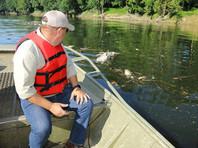 Разлив виски в Кентукки: в реке на участке в 37 км гибнет рыба, странный вкус водопроводной воды в столице штата (ФОТО, ВИДЕО)