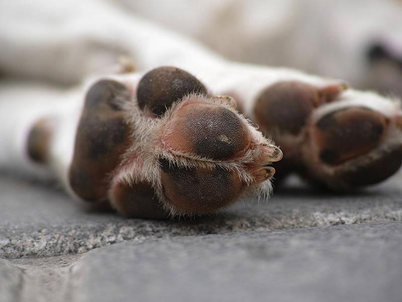 Ветеринары опасаются, что неизвестная болезнь, убившая десятки собак в Норвегии, может быть опасна и для людей