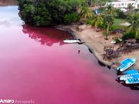 Лагуна на юге Мексики окрасилась в ярко-розовый цвет (ФОТО, ВИДЕО)