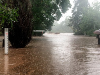 В Австралии проливные дожди потушили лесной пожар, бушевавший 74 дня