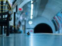"""Бой мышей в метро Лондона получил главный приз публики на конкурсе """"Лучшее фото живой природы - LUMIX"""" (ФОТО)"""