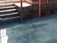 """Коронавирус """"перезагрузил"""" Венецию: после запрета на туризм в каналах завелись рыбы, лебеди и дельфины (ФОТО, ВИДЕО)"""