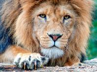 """СМИ предупреждают: в Сети гуляет фейк о 500 львах, """"выпущенных на улицы городов РФ"""" якобы для соблюдения гражданами карантина (ФОТО)"""