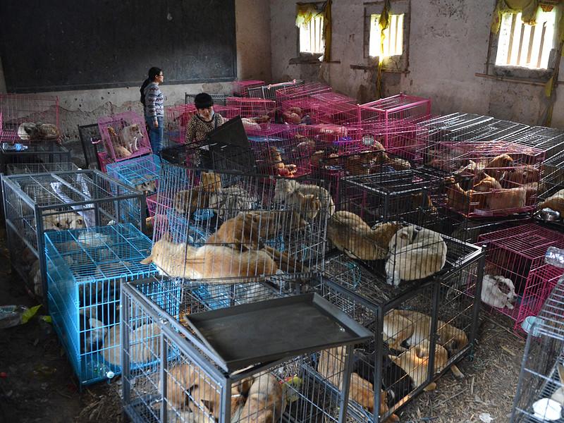 Министерство сельского хозяйства Китая исключило собак из проекта списка животных, чье мясо можно употреблять в пищу