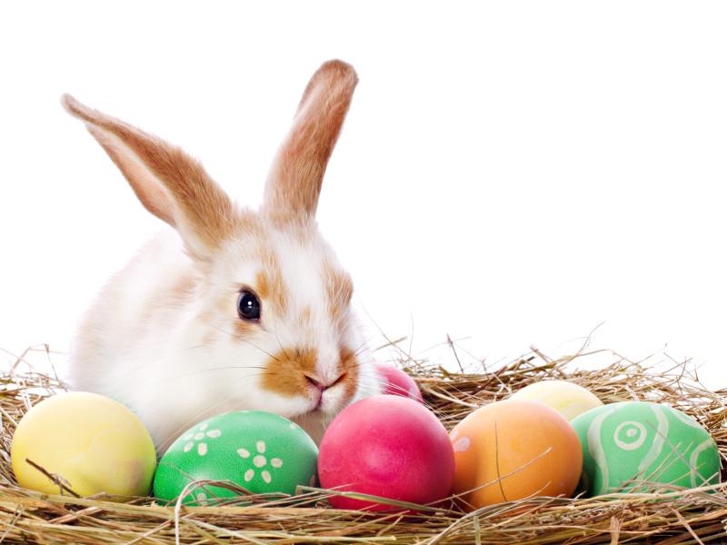 """В Новой Зеландии, Ирландии и Канаде официально разрешили Пасхальному кролику и Зубной фее работать во время карантина"""" />"""