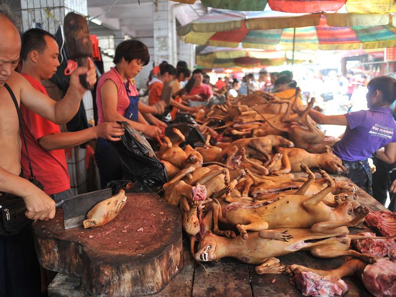 В китайском Шэньчжэне запретили есть котов и собак