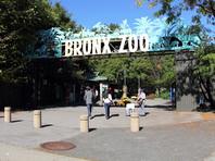 Первый известный в мире случай инфицирования тигра коронавирусом зарегистрировали в зоопарке Бронкса в Нью-Йорке