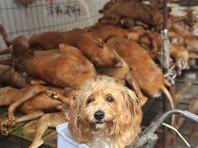 По оценкам Гонконгской группы защиты животных Animals Asia, ежегодно в Китае убивают и съедают около 10 миллионов собак и четырех миллионов кошек