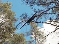 В Латвии найден потерянный Агентством гражданской авиации беспилотник