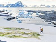 Из-за глобального потепления снег в Антарктике становится ярко-зеленым (ВИДЕО, ФОТО)