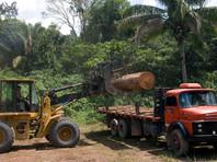 Экологи предрекли человечеству приход новой пандемии из вырубленных джунглей Амазонки