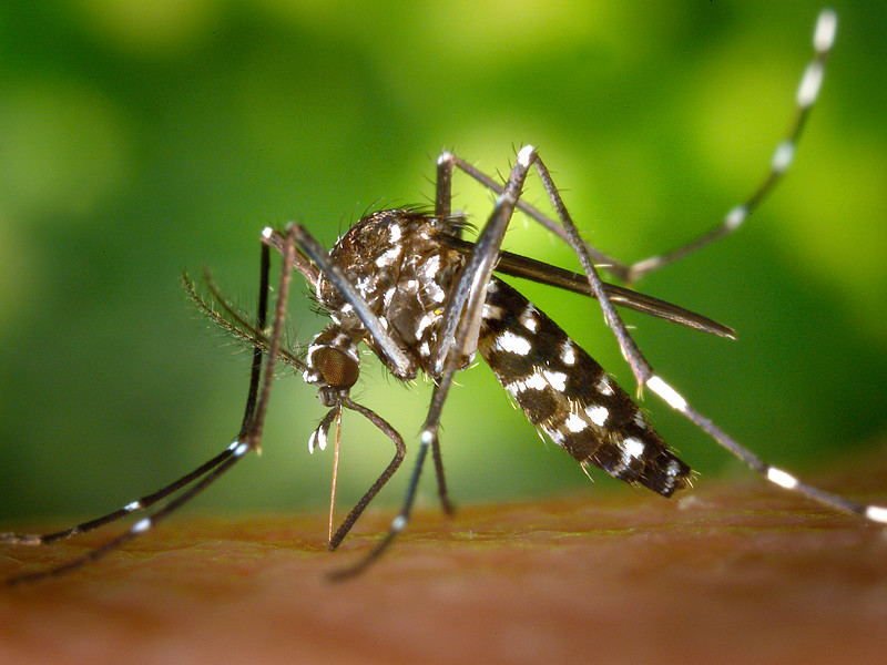 На опустевшей Ибице началось нашествие комаров, переносящих вирусы
