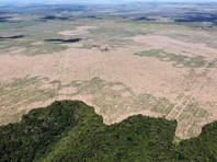 Продолжение хищнической вырубки лесов Амазонии, региона, включающего в себя часть территорий Бразилии, Перу, Колумбии, Венесуэлы, Эквадора, Боливии, Гайаны, Суринама и Французской Гвианы, может привести к вспышке зоонозов - болезней, передающихся от животных к человеку