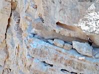 В Израиле вырастили грифа с помощью беспилотника. На этой неделе он впервые вылетел из гнезда (ВИДЕО)