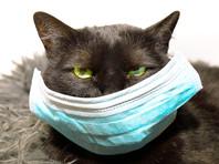 В Великобритании выявлен первый случай заражения коронавирусом домашнего кота