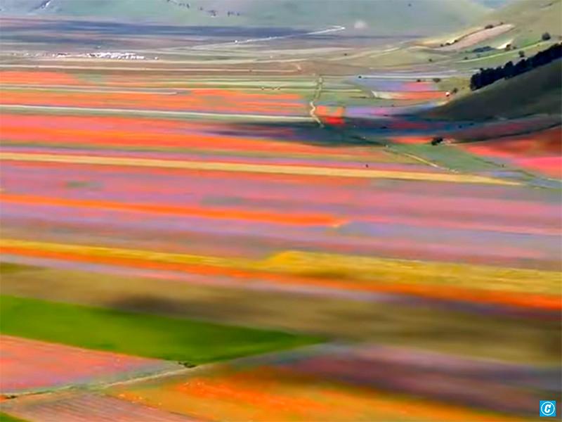 Тысячи туристов съехались в итальянскую деревню, чтобы увидеть на цветущих лугах ожившие картины импрессионистов (ФОТО, ВИДЕО)