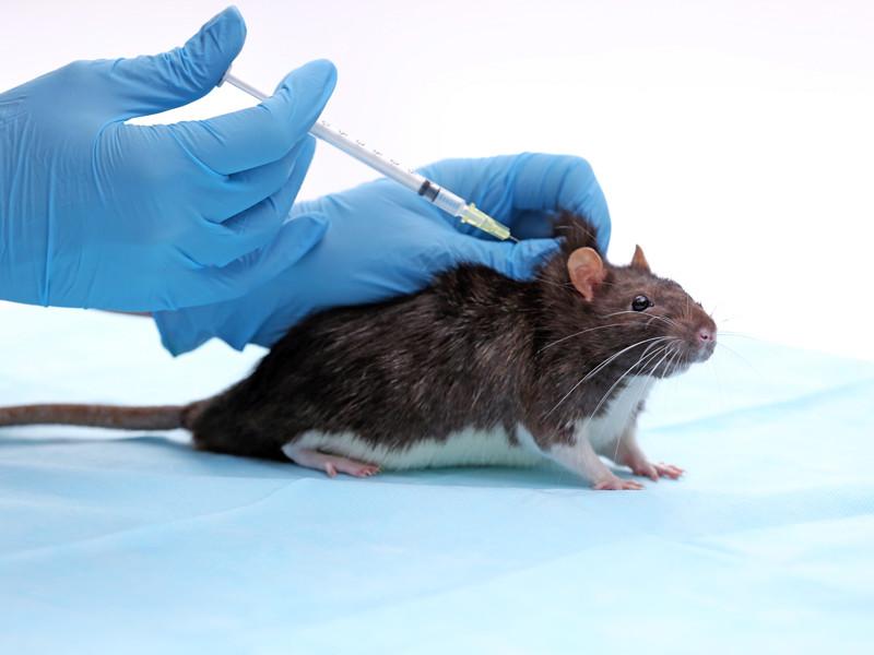 Ученые из США обнаружили компонент, способный нейтрализовать коронавирус