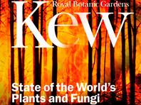 Британский королевский ботанический сад выпустил доклад о состоянии растений и грибов в мире