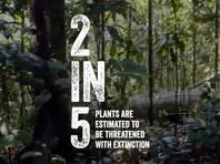 Около 40% видов растений на Земле находятся под угрозой полного исчезновения