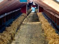 Заводчики в Дании уничтожили более 11 миллионов зверьков из-за заражения мутировавшим коронавирусом