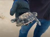На средиземноморском побережье Израиля произошла экологическая катастрофа: пляжи в мазуте, животные гибнут (ВИДЕО)