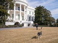 Джо Байден с собаками Мейджор (на фото - впереди) и Чемп
