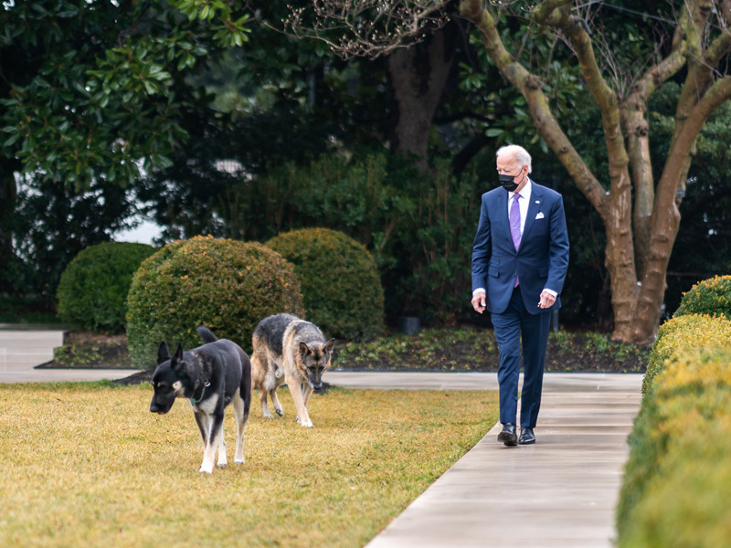 Джо Байден с собаками Мейджор (на фото - слева) и Чемп