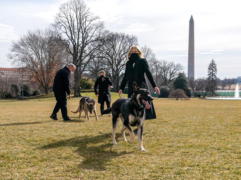 У Байденов две немецких овчарки, 13-летний Чемп и трехлетний Мейджор (на фото - спереди)