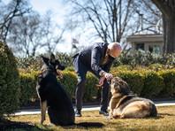 Джо Байден с собаками Чемп и Мейджор (на фото - слева)
