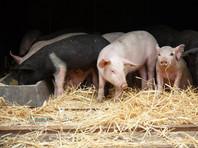 Антироссийские санкции ослабили европейское сельское хозяйство - Le Monde