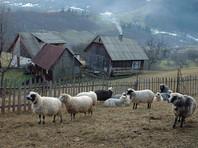 """Вв министерстве экономического развития и торговли Украины пришли к выводу о том, что """"украинские производители способны полностью компенсировать российский импорт"""", осуществляемый этими 243 компании"""